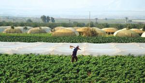 jordan-water-agriculture